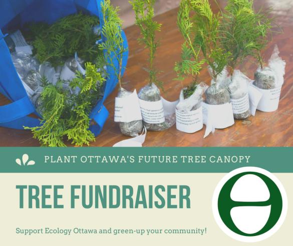 tree fundraiser, plant ottawa's future tree canopy